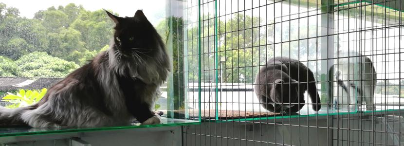 G-Pet - Cats Boarding Hotel