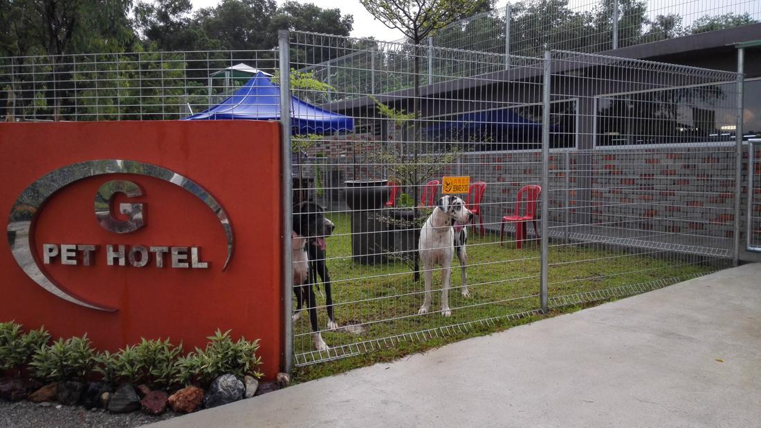 G Pet Dog Boarding Kennel Dogs Hotel Kuala Lumpur Petaling